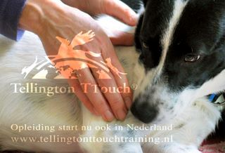 Tellington TTouch Training NL